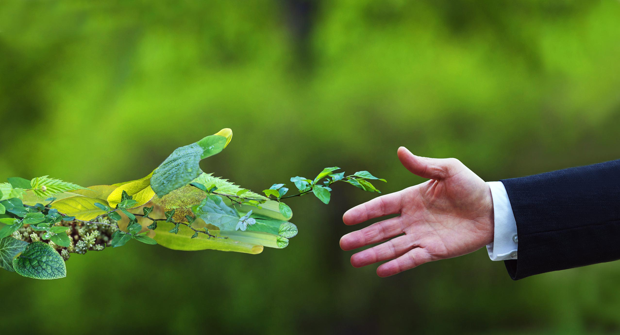 CRIBE - Biomass Solutions for Our Future